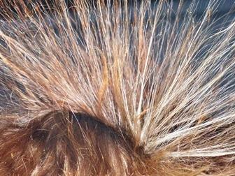 hair-113313_960_720.jpg