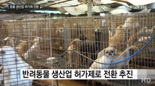 반려동물 생산업 허가제.png