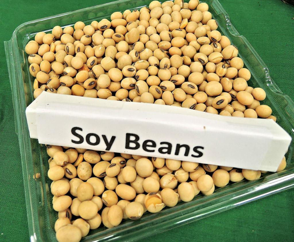 콩의 효능 (5).jpg